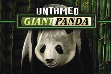 Play Untamed Giant Panda Slots on HippoZino